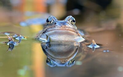 Boiling Frog Phenomenon and Debts: Do you Feel Like a Frog?
